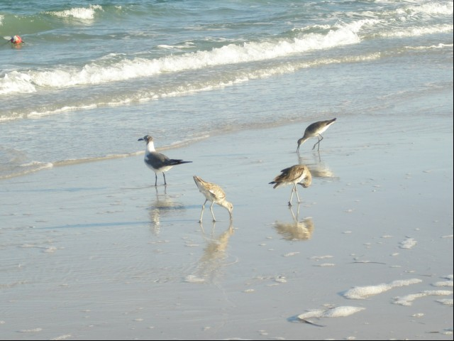Locals fishing, Clearwater Beach