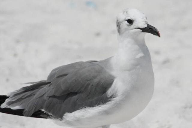 Clearwater Beach - Florida - Orlando / Florida Guide
