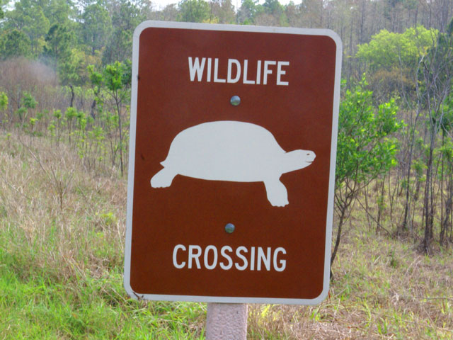 Watch out for widlife crossing!